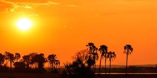 Solnedgång för orange glöd i ett palmträdlandskap Arkivbild