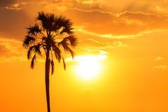 Solnedgång för orange glöd med en palmträdkontur Royaltyfria Bilder