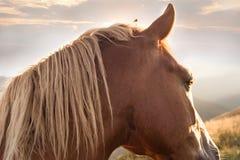 Solnedgång i bergnaturbakgrund Häst på sommarängen Royaltyfria Bilder