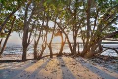 Solnedgång i evergladesna Arkivbild