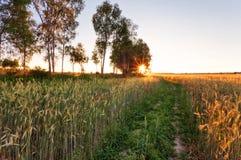 Solnedgång i sommarfält Arkivfoton