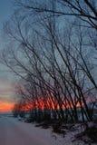 Solnedgång med trädskugga Arkivbild