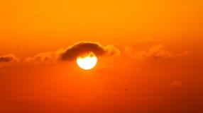 Solnedgång och fåglar Royaltyfri Bild