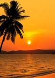 Solnedgång på den tropiska stranden med konturpalmträdet Arkivfoto