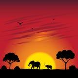 Solnedgång på en savann Arkivbilder