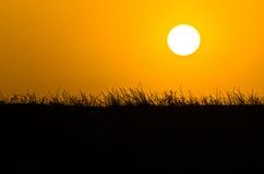 Solnedgång över medelhavs- torrt gräs nära havskust i Sithonia Arkivbilder