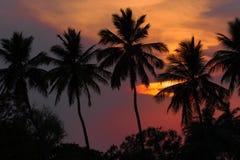 Solnedgången i djungeln med gömma i handflatan konturn Arkivfoto