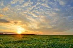 Solnedgånghimmel och sol över det gröna fältet Royaltyfri Fotografi