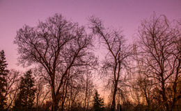 Solnedgångträd Arkivbilder