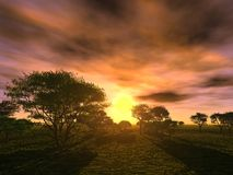 solnedgångtrees Arkivbild