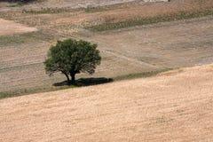 Solo árbol Imagenes de archivo