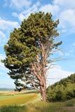 Solo árbol Imagen de archivo libre de regalías