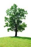 Solo árbol Foto de archivo