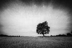 Solo árbol Foto de archivo libre de regalías