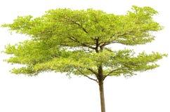 Solo árbol aislado Imagenes de archivo