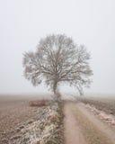 Solo árbol al lado del countryroad rural Fotografía de archivo