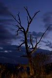 Solo árbol con el fondo oscuro del cielo imagenes de archivo