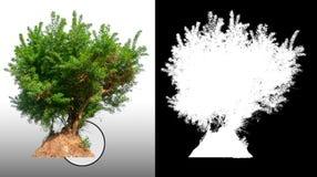 Solo árbol con la trayectoria de recortes stock de ilustración