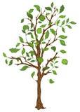 Solo árbol con las hojas Imagen de archivo libre de regalías