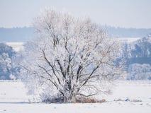 Solo árbol cubierto en helada y nieve Fotografía de archivo