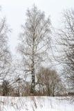 Solo árbol de abedul Foto de archivo libre de regalías