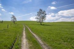 Solo árbol de abedul de la primavera y cielo azul con las nubes blancas Fotografía de archivo