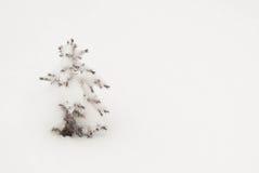 Solo árbol de hoja perenne miniatura Foto de archivo libre de regalías