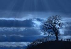 Solo árbol de la silueta Fotografía de archivo