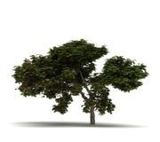 Solo árbol de llama ilustración del vector