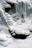 Solo árbol de pino en nieve Imagen de archivo
