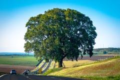 Solo árbol de roble Fotos de archivo libres de regalías