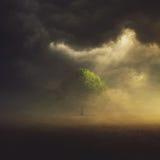Solo árbol en campo imagen de archivo