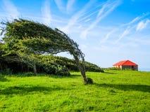 Solo árbol en día ventoso Imagen de archivo libre de regalías