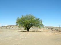 Solo árbol en desierto Foto de archivo