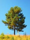 Solo árbol en el campo Foto de archivo