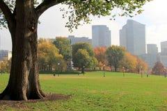 Solo árbol en el primero plano, paisaje urbano nebuloso que enmarca Fotografía de archivo