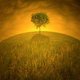 Solo árbol en la colina Fotografía de archivo libre de regalías