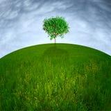 Solo árbol en la colina Foto de archivo