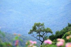 Solo árbol en la montaña imagenes de archivo