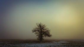 Solo árbol en la niebla Foto de archivo libre de regalías