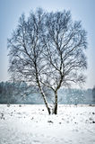 Solo árbol en la nieve Imagenes de archivo