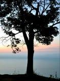 Solo árbol en la salida del sol Imagenes de archivo