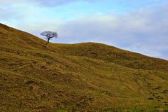Solo árbol en las colinas, districto máximo. Fotos de archivo
