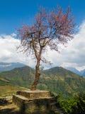 Solo árbol en Nepal Fotos de archivo