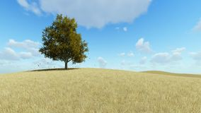 Solo árbol en otoño, hojas que caen