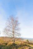 Solo árbol en sol del invierno Fotos de archivo libres de regalías