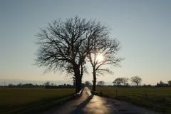 Solo árbol en un campo Fotografía de archivo