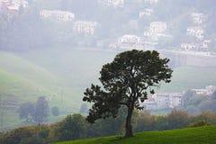 Solo árbol en un valle imágenes de archivo libres de regalías
