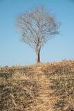 Solo árbol muerto Fotografía de archivo libre de regalías