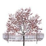 Solo árbol nevado aislado en fondo blanco puro imágenes de archivo libres de regalías